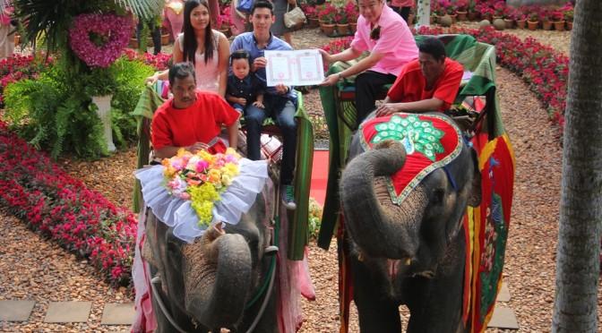 สวนนงนุช พัทยา จดทะเบียนสมรสบนหลังช้างกว่า 100 คู่รัก
