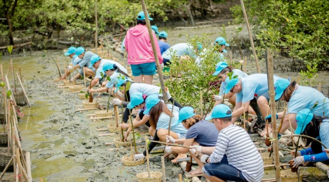 เซ็นทาราแกรนด์ มิราจ บีช รีสอร์ท พัทยา ปล่อยปูแสม ปลูกป่าชายเลน เสริมระบบนิเวศ