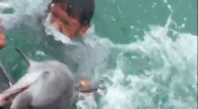 นาที จนท.กู้ภัยทางทะเล ช่วยยื้อชีวิตลูกโลมาหลงฝูง สุดท้ายไม่รอดน็อกน้ำทะเลพัทยาตาย